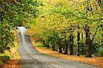 Scenic Road    Stock Photo - Premium Rights-Managed, Artist: R. Ian Lloyd, Code: 700-00168506