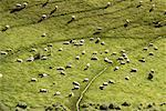 Sheep, South Island New Zealand    Stock Photo - Premium Rights-Managed, Artist: Greg Stott, Code: 700-00169094