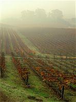 Vineyard    Stock Photo - Premium Rights-Managednull, Code: 700-00170005