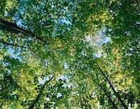 peter griffith - Trees, Halton Agreement Forest, Ontario, Canada    Stock Photo - Premium Royalty-Freenull, Code: 600-00170939