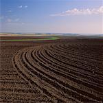 Fallow Field, near Delmas, Manitoba, Canada    Stock Photo - Premium Royalty-Free, Artist: Hans Blohm, Code: 600-00172242