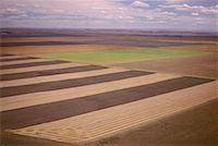 Strip Farming, North of Lethbridge, Alberta, Canada    Stock Photo - Premium Royalty-Freenull, Code: 600-00172945