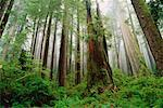 Prairie Creek Redwoods State Park, California, USA