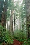 Lady Bird Johnson Grove, Redwood National Park, California, Canada