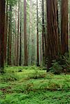 Humboldt Redwoods State Park, California, USA
