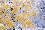 Tree with Snow in High Park, Toronto Ontario, Canada