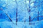 Snow Covered Trees and Fence, High Park, Toronto, Ontario, Canada