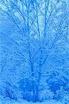 Snow Covered Trees, High Park, Toronto, Ontario, Canada