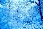Snow-Covered Trees, High Park, Toronto, Ontario, Canada