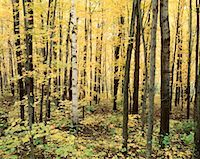 peter griffith - Forest, Algonquin Provincial Park, Ontario, Canada    Stock Photo - Premium Royalty-Freenull, Code: 600-00174205