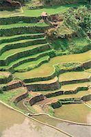 philippine terrace farming - Rice Terraces at Banaue, Province of La Union, Philippines    Stock Photo - Premium Royalty-Freenull, Code: 600-00174291