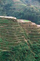 philippine terrace farming - Rice Terraces at Banaue, Province of La Union, Philippines    Stock Photo - Premium Royalty-Freenull, Code: 600-00174293