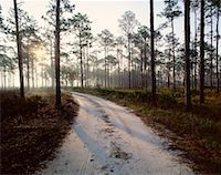 peter griffith - Appalachicola National Forest, Florida, USA    Stock Photo - Premium Royalty-Freenull, Code: 600-00174359