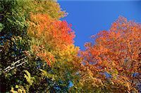 Fall Colours, Gatineau Region, Quebec, Canada    Stock Photo - Premium Royalty-Freenull, Code: 600-00174389