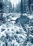 Wardle Creek, Kootenay National Park, British Columbia, Canada