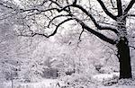 High Park in Winter, Toronto, Ontario, Canada    Stock Photo - Premium Royalty-Free, Artist: J. A. Kraulis, Code: 600-00176275