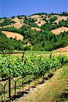 Overview of Vineyard    Stock Photo - Premium Rights-Managed, Artist: Ed Gifford, Code: 700-00178409