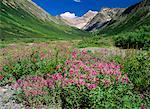 Meadow in Valley Northern Rockies British Columbia, Canada
