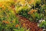 Perennial Garden New Brunswick, Canada    Stock Photo - Premium Rights-Managed, Artist: Freeman Patterson, Code: 700-00182661