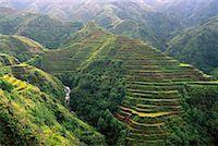 philippine terrace farming - Banaue Rice Terraces Banaue, Ifugao, Philippines    Stock Photo - Premium Rights-Managednull, Code: 700-00183717