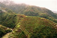 philippine terrace farming - Banaue Rice Terraces Banaue, Ifugao, Philippines    Stock Photo - Premium Rights-Managednull, Code: 700-00183718
