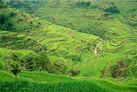 philippine terrace farming - Banaue Rice Terraces Banaue, Ifugao Philippines    Stock Photo - Premium Rights-Managednull, Code: 700-00183721