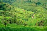 Banaue Rice Terraces Banaue, Ifugao Philippines