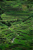 philippine terrace farming - Banaue Rice Terraces Banaue, Ifugao Philippines    Stock Photo - Premium Rights-Managednull, Code: 700-00183722
