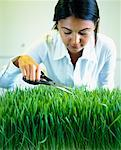 Woman Trimming Grass in Office