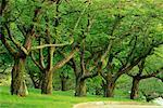 Grove of Trees in Summer High Park Toronto, Ontario, Canada    Stock Photo - Premium Rights-Managed, Artist: J. A. Kraulis, Code: 700-00184136