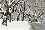 Trees in Winter High Park Toronto, Ontario, Canada