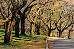 Tree-Lined Road in Springtime High Park Toronto, Ontario, Canada    Stock Photo - Premium Rights-Managed, Artist: J. A. Kraulis, Code: 700-00184140