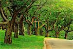 Tree-Lined Road in Summer High Park Toronto, Ontario, Canada    Stock Photo - Premium Rights-Managed, Artist: J. A. Kraulis, Code: 700-00184142