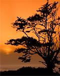 Tree at Dusk    Stock Photo - Premium Rights-Managed, Artist: Roy Ooms, Code: 700-00184238