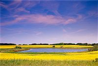 Pond and Farmland    Stock Photo - Premium Rights-Managednull, Code: 700-00185271