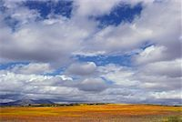 Clouds over Meadow Namaqualand Africa    Stock Photo - Premium Rights-Managednull, Code: 700-00186872