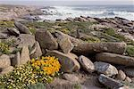 Beach in Spring Time Namaqualand South Africa    Stock Photo - Premium Rights-Managed, Artist: Freeman Patterson, Code: 700-00186875
