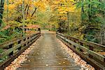 Bridge in Forest Great Smoky Mountains National Park Tennessee, USA    Stock Photo - Premium Rights-Managed, Artist: Peter Griffith, Code: 700-00187486