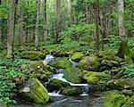 Smoky Mountains National Park Tennessee, USA    Stock Photo - Premium Rights-Managed, Artist: Peter Griffith, Code: 700-00187491