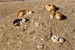 Dogs Sleeping in Sun    Stock Photo - Premium Rights-Managed, Artist: Daniel Barillot, Code: 700-00199662