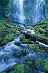 Lower Proxy Falls Oregon, USA    Stock Photo - Premium Rights-Managed, Artist: Roy Ooms, Code: 700-00199868
