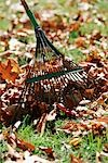 Raking leaves Stock Photo - Premium Royalty-Free, Artist: Shannon Ross, Code: 604-00225836