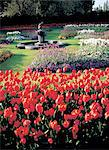 England, London, Regents Park, Queens Garden in summer Stock Photo - Premium Royalty-Freenull, Code: 610-00256832