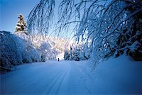 Trail Through Forest in Winter    Stock Photo - Premium Rights-Managednull, Code: 700-00270080
