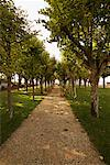 Tree-Lined Path Amboise France    Stock Photo - Premium Rights-Managed, Artist: George Simhoni, Code: 700-00285776