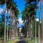 Codrington College Barbados, West Indies