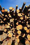 Pile of Logs    Stock Photo - Premium Rights-Managed, Artist: David Papazian, Code: 700-00361364