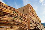 Stack of Plywood Veneer