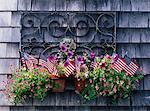 Potted Plant and American Flags    Stock Photo - Premium Rights-Managed, Artist: Strauss/Curtis, Code: 700-00367905