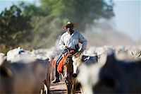 Cowboy on Cattle Drive, Mato Grosso Pantanal, Brazil    Stock Photo - Premium Rights-Managednull, Code: 700-00426013
